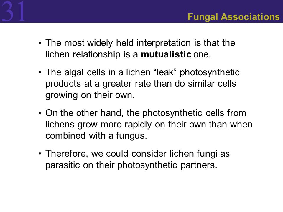 Fungal Associations The most widely held interpretation is that the lichen relationship is a mutualistic one.