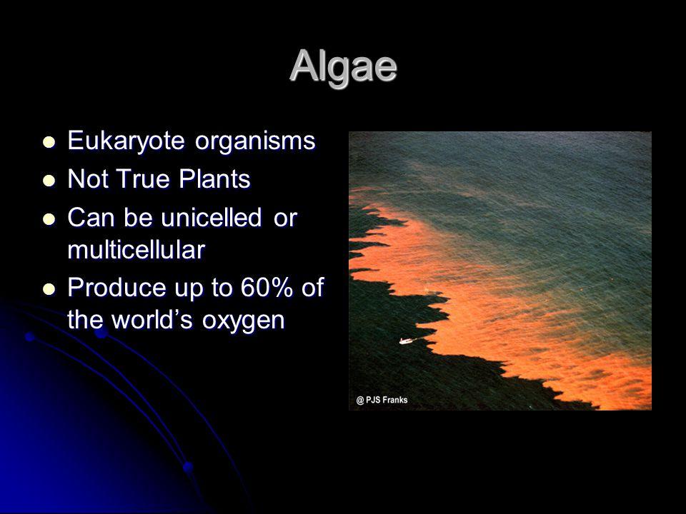 Algae Eukaryote organisms Not True Plants