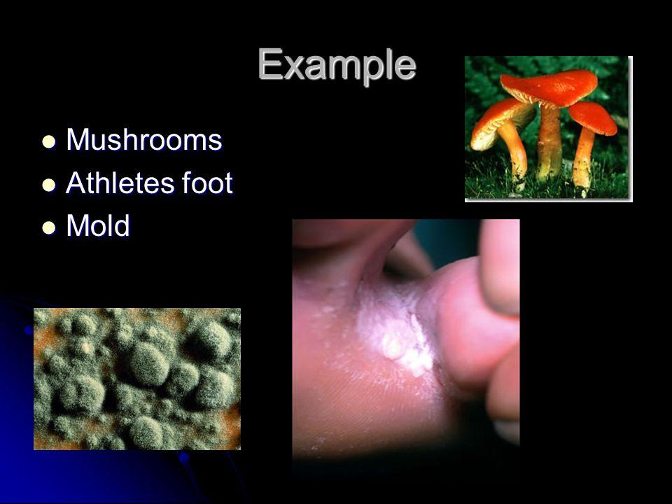 Example Mushrooms Athletes foot Mold