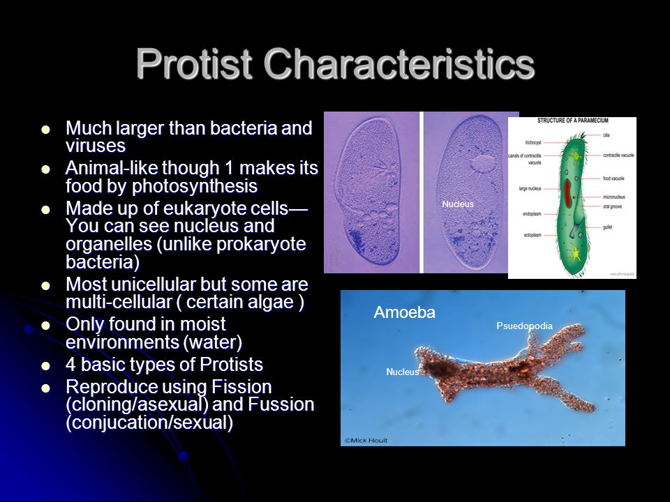 Protist and Fungi You will be able to explain how protists ...