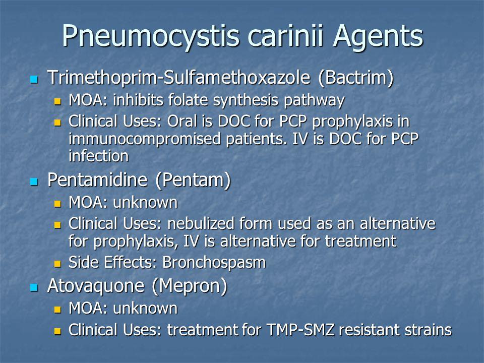 Pneumocystis carinii Agents