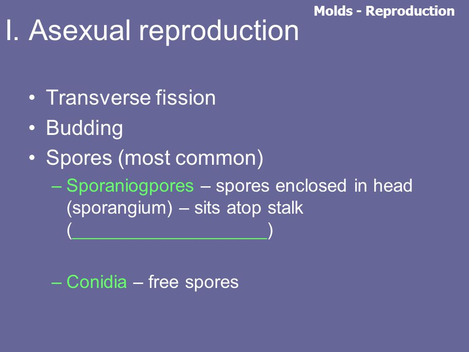 I. Asexual reproduction