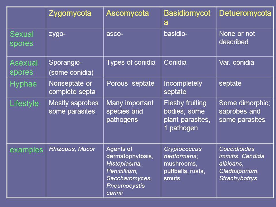 Zygomycota Ascomycota Basidiomycota Detueromycota Sexual spores