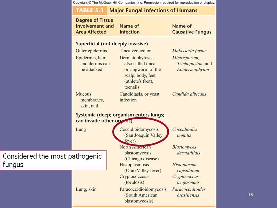 Considered the most pathogenic fungus
