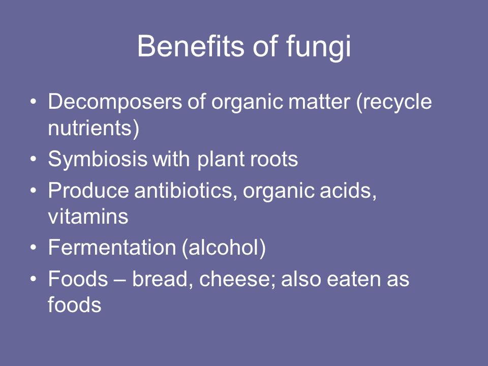 Benefits of fungi Decomposers of organic matter (recycle nutrients)