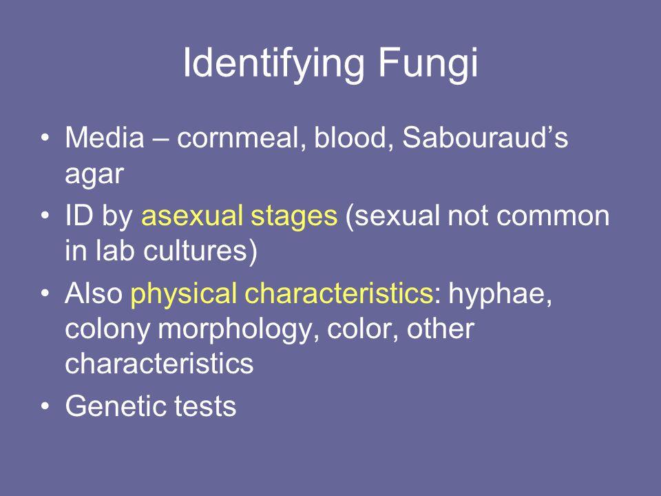 Identifying Fungi Media – cornmeal, blood, Sabouraud's agar