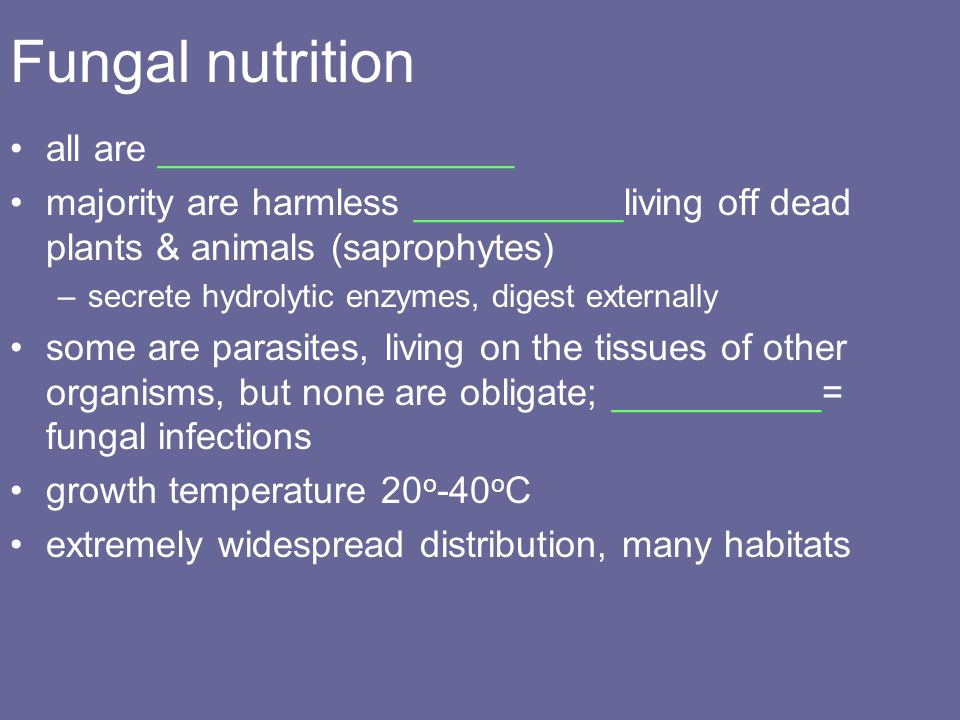 Fungal nutrition all are _________________
