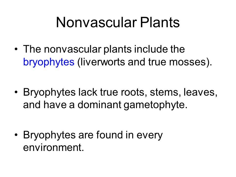 Nonvascular Plants The nonvascular plants include the bryophytes (liverworts and true mosses).