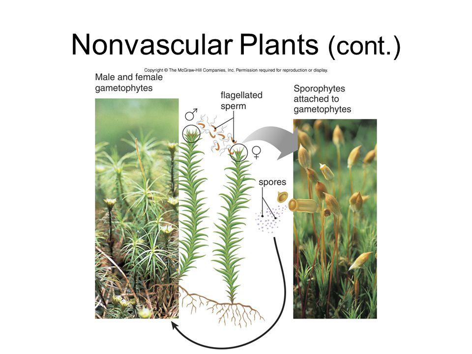 Nonvascular Plants (cont.)