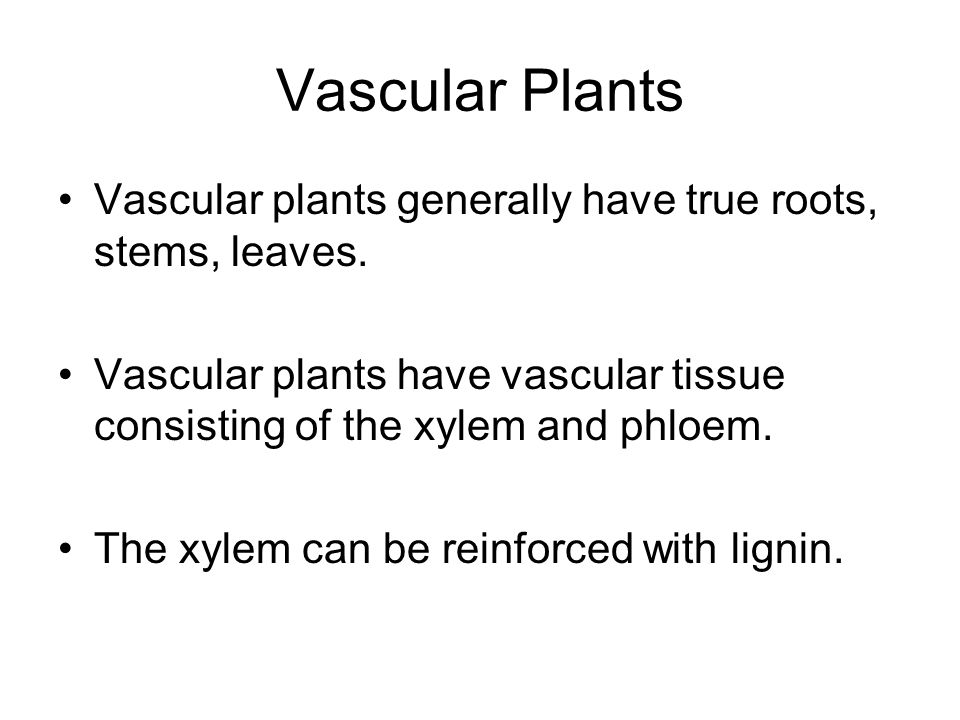 Vascular Plants Vascular plants generally have true roots, stems, leaves. Vascular plants have vascular tissue consisting of the xylem and phloem.