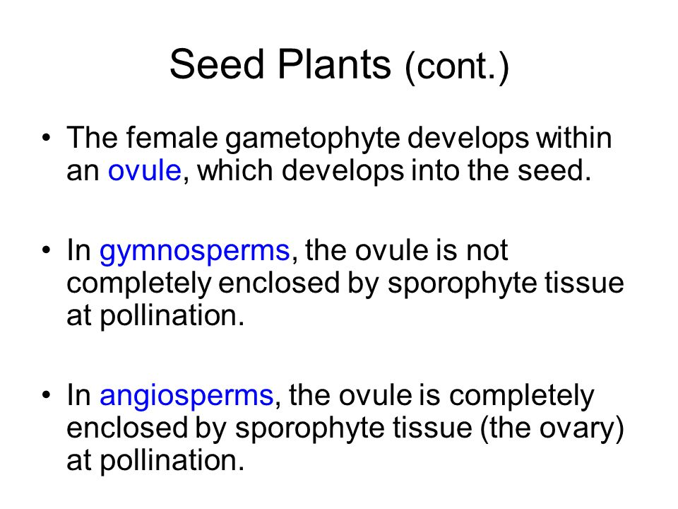 Seed Plants (cont.) The female gametophyte develops within an ovule, which develops into the seed.