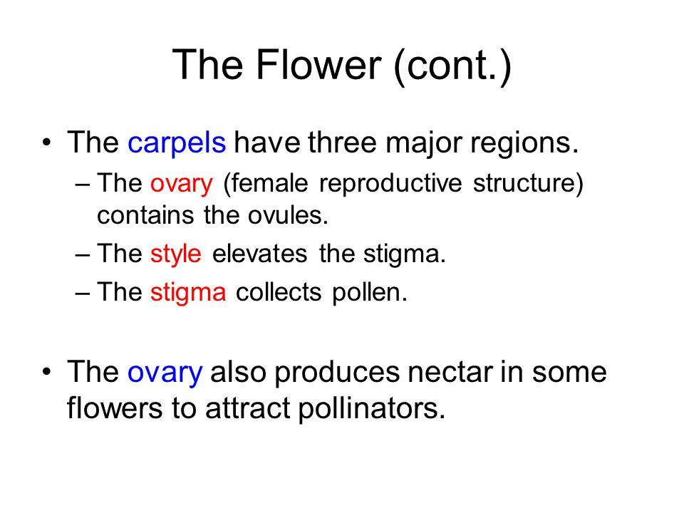 The Flower (cont.) The carpels have three major regions.