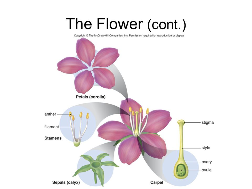 The Flower (cont.)