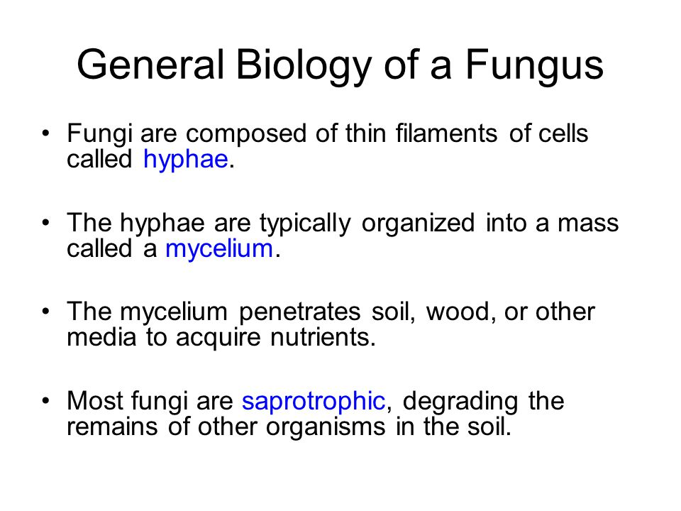 General Biology of a Fungus