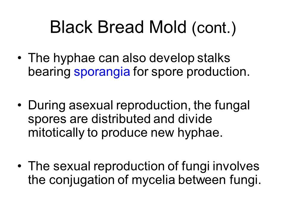 Black Bread Mold (cont.)