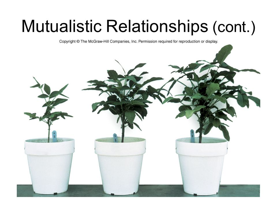 Mutualistic Relationships (cont.)