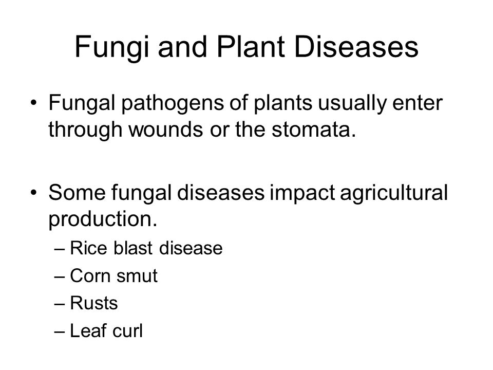 Fungi and Plant Diseases