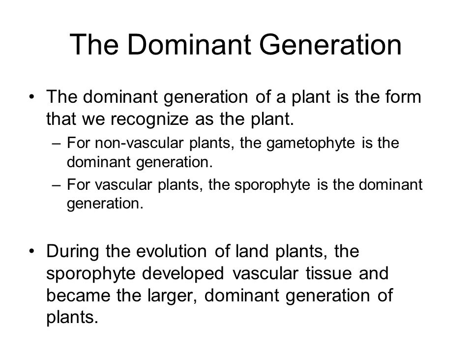 The Dominant Generation