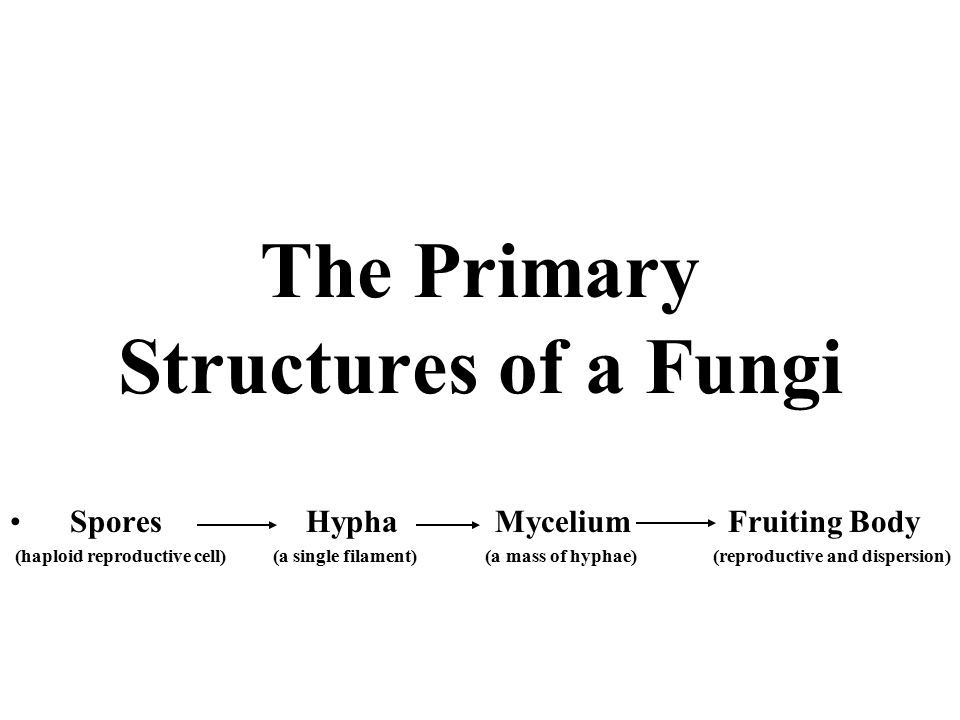 The Primary Structures of a Fungi