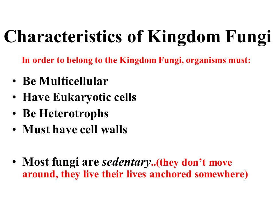 Characteristics of Kingdom Fungi