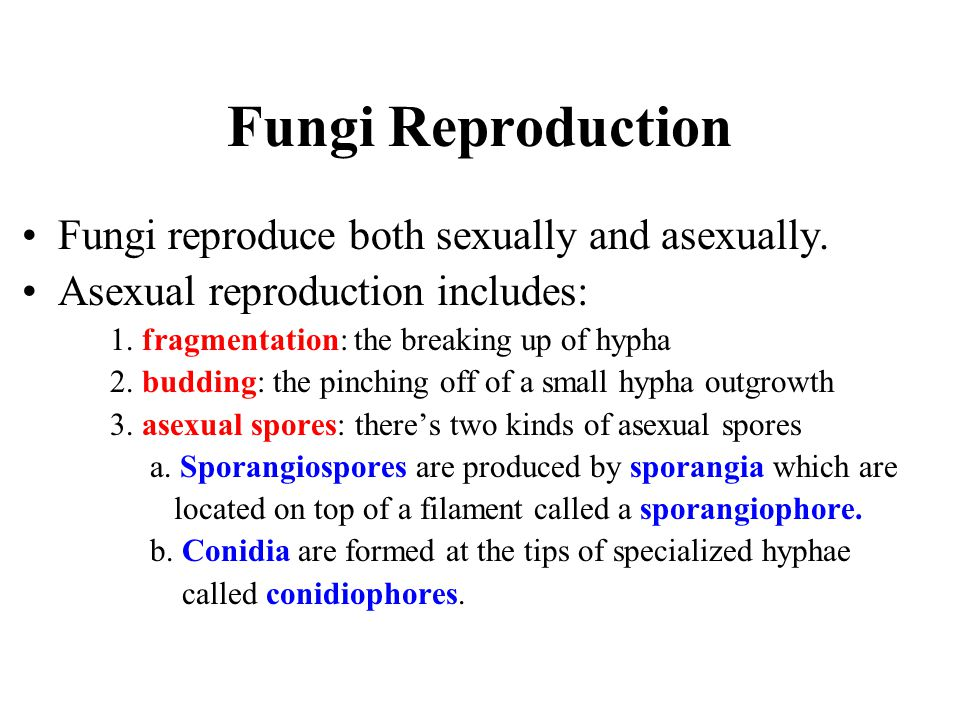 Fungi Reproduction Fungi reproduce both sexually and asexually.