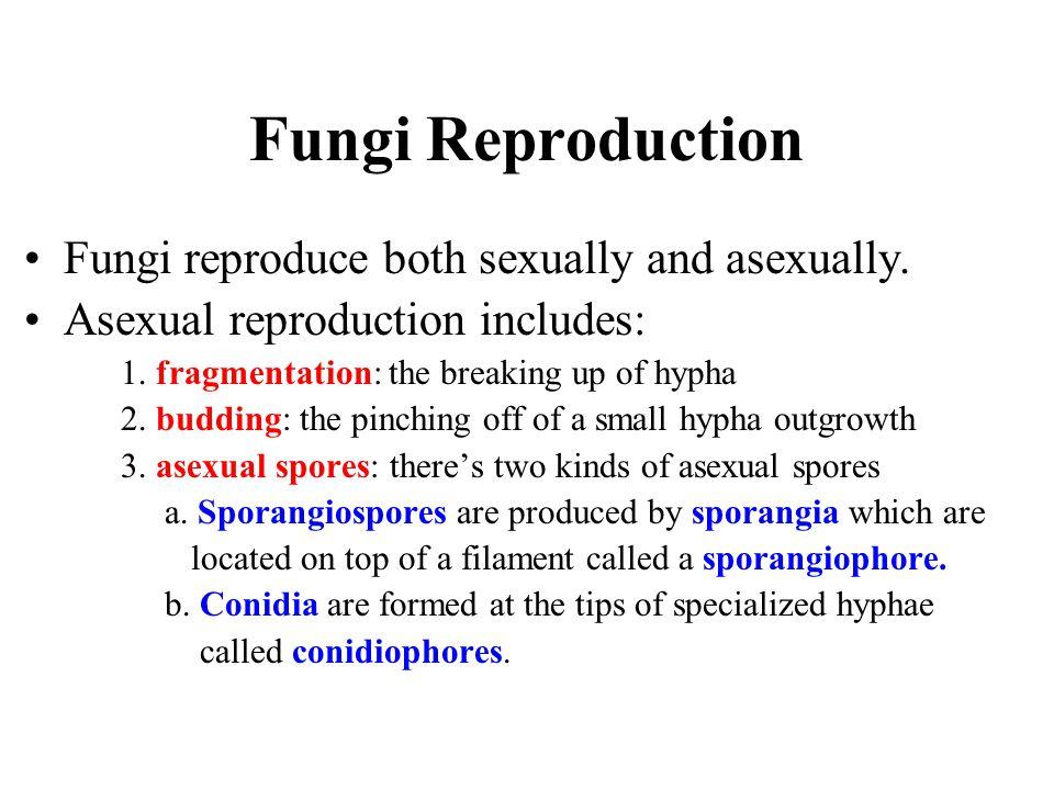 Fungi Reproduction Fungi reproduce both sexually and asexually.