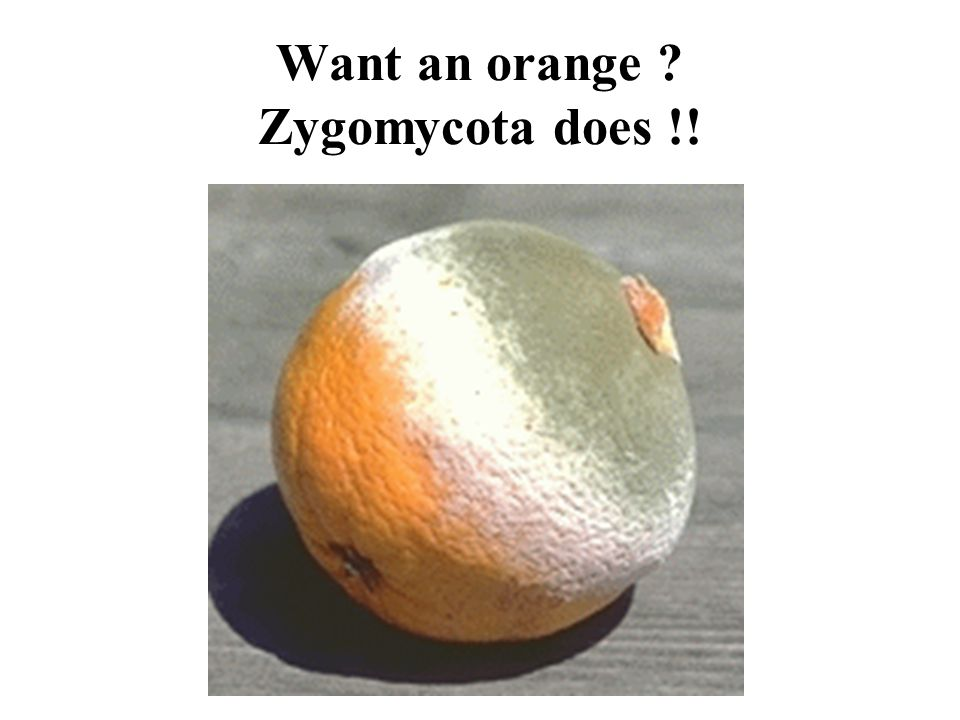 Want an orange Zygomycota does !!