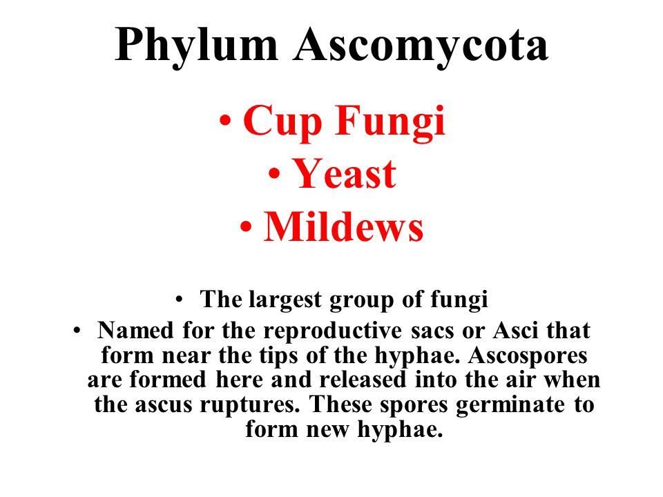The largest group of fungi