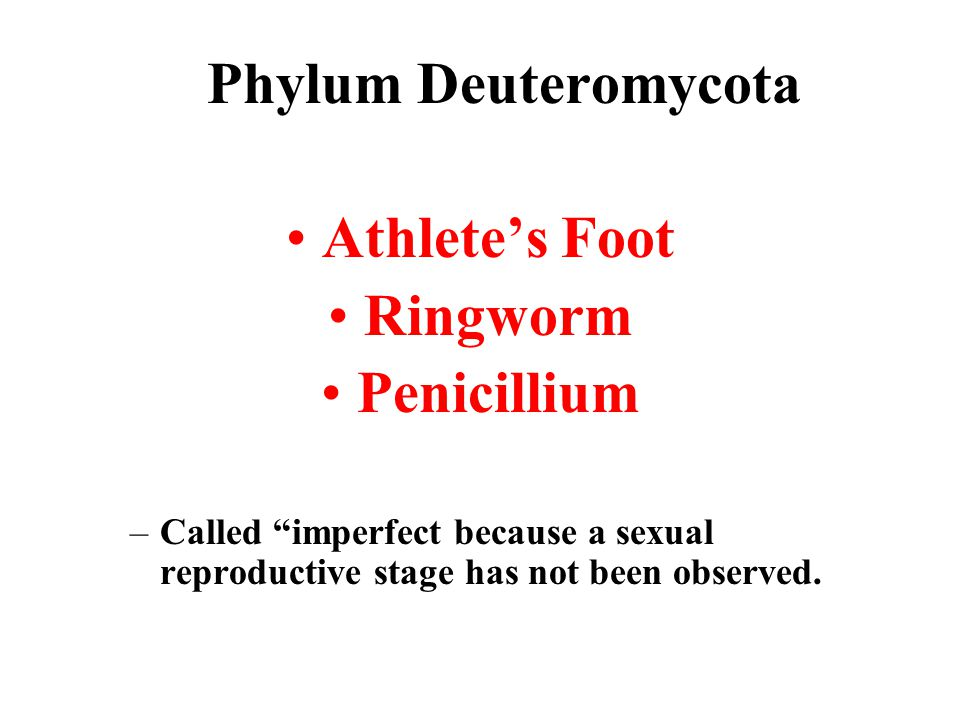 Phylum Deuteromycota Athlete's Foot Ringworm Penicillium