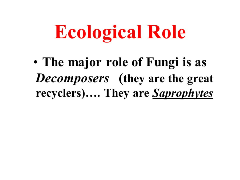 Ecological Role The major role of Fungi is as Decomposers (they are the great recyclers)….