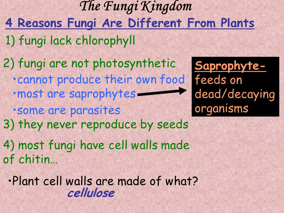 The Fungi Kingdom 4 Reasons Fungi Are Different From Plants