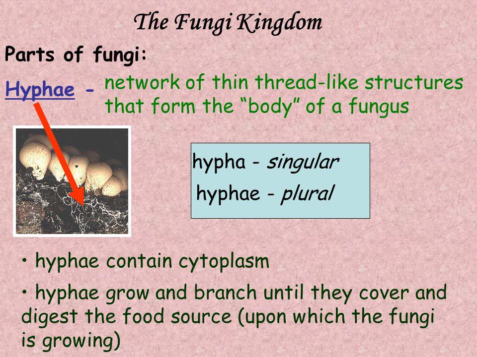 The Fungi Kingdom Parts of fungi: