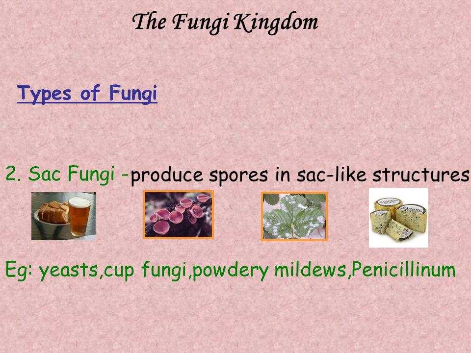 The Fungi Kingdom Types of Fungi 2. Sac Fungi -