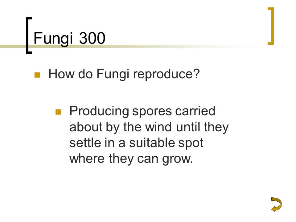 Fungi 300 How do Fungi reproduce