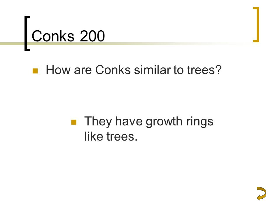 Conks 200 How are Conks similar to trees