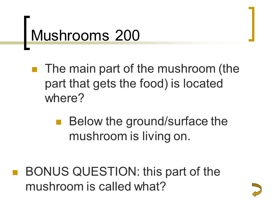 Mushrooms 200 The main part of the mushroom (the part that gets the food) is located where Below the ground/surface the mushroom is living on.