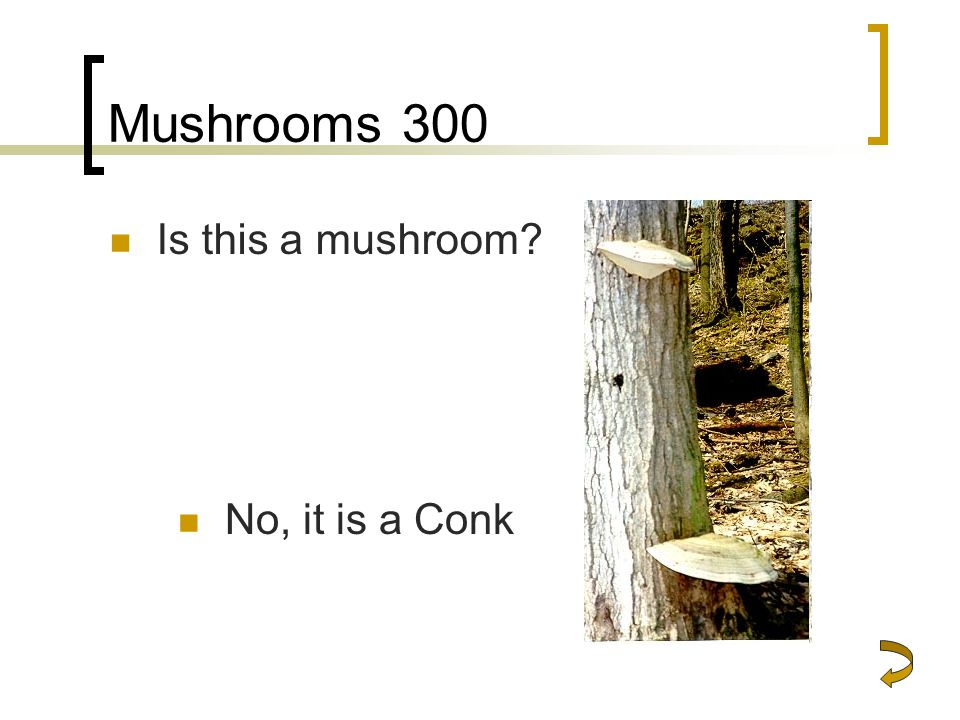 Mushrooms 300 Is this a mushroom No, it is a Conk