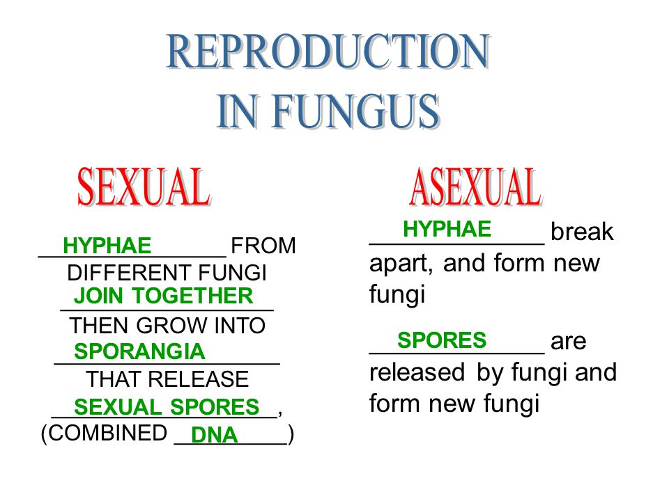 REPRODUCTION IN FUNGUS SEXUAL ASEXUAL