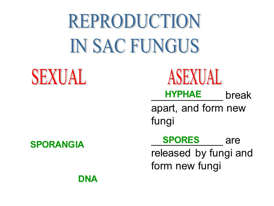 REPRODUCTION IN SAC FUNGUS SEXUAL ASEXUAL