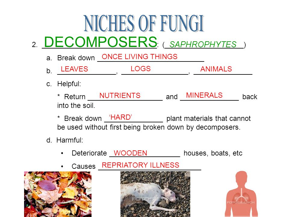 NICHES OF FUNGI DECOMPOSERS SAPHROPHYTES