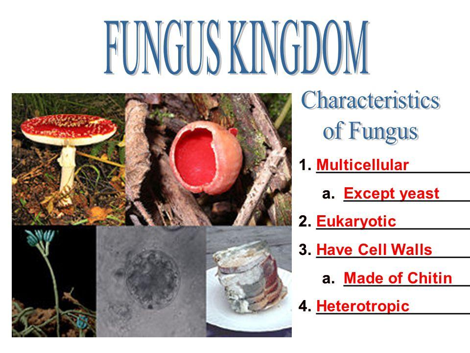 FUNGUS KINGDOM Characteristics of Fungus ___________________