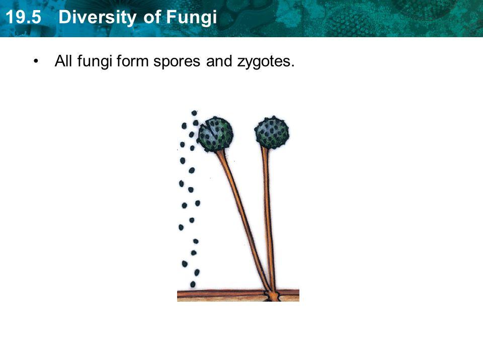 All fungi form spores and zygotes.