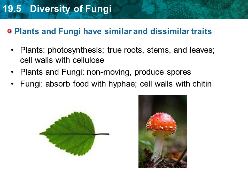Plants and Fungi have similar and dissimilar traits