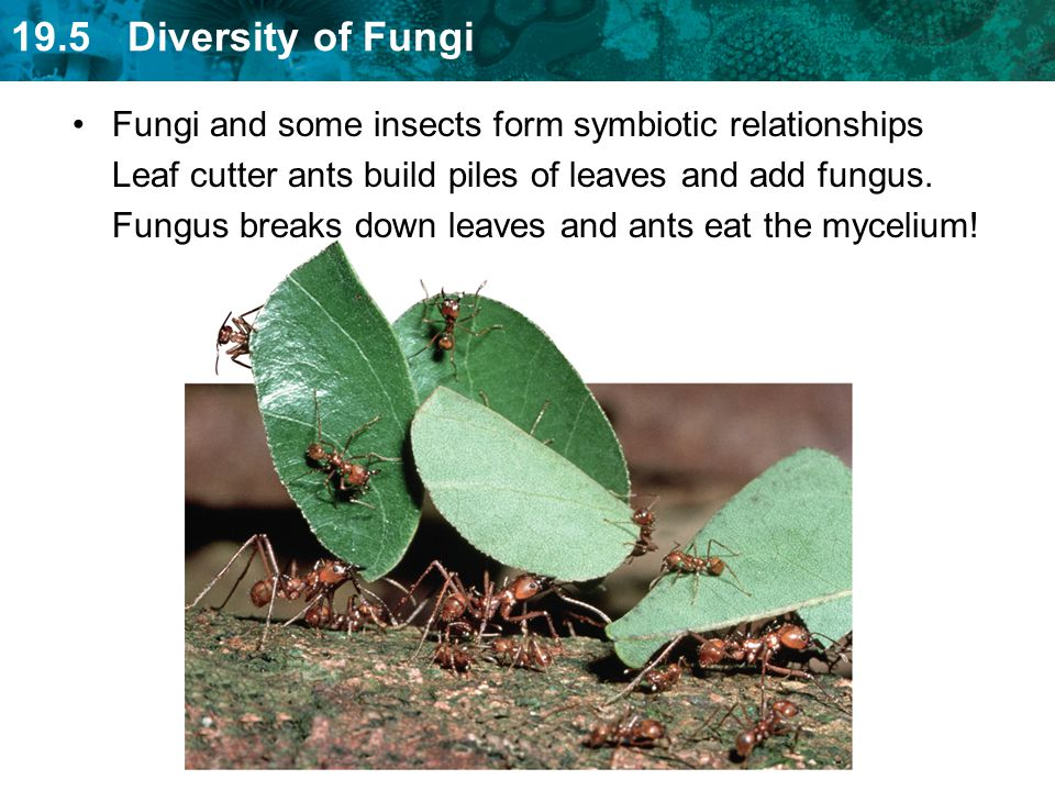Fungi and some insects form symbiotic relationships