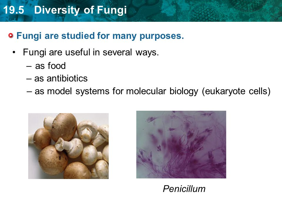 Fungi are studied for many purposes.
