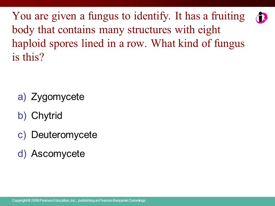 You are given a fungus to identify