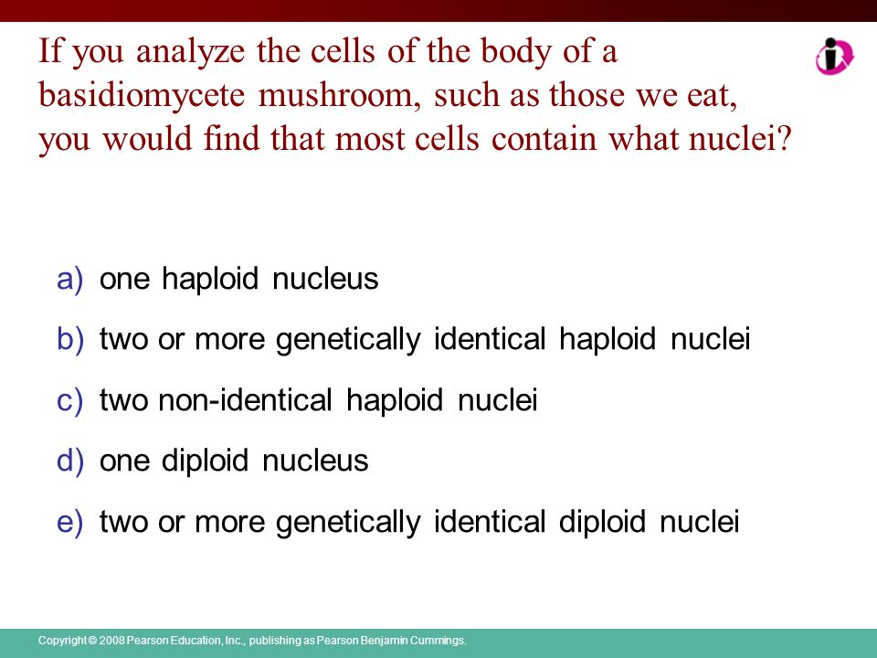 If you analyze the cells of the body of a basidiomycete mushroom, such as those we eat, you would find that most cells contain what nuclei
