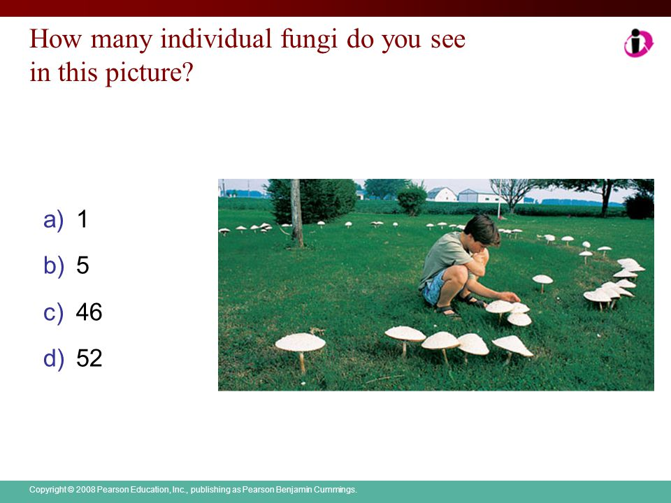 How many individual fungi do you see in this picture