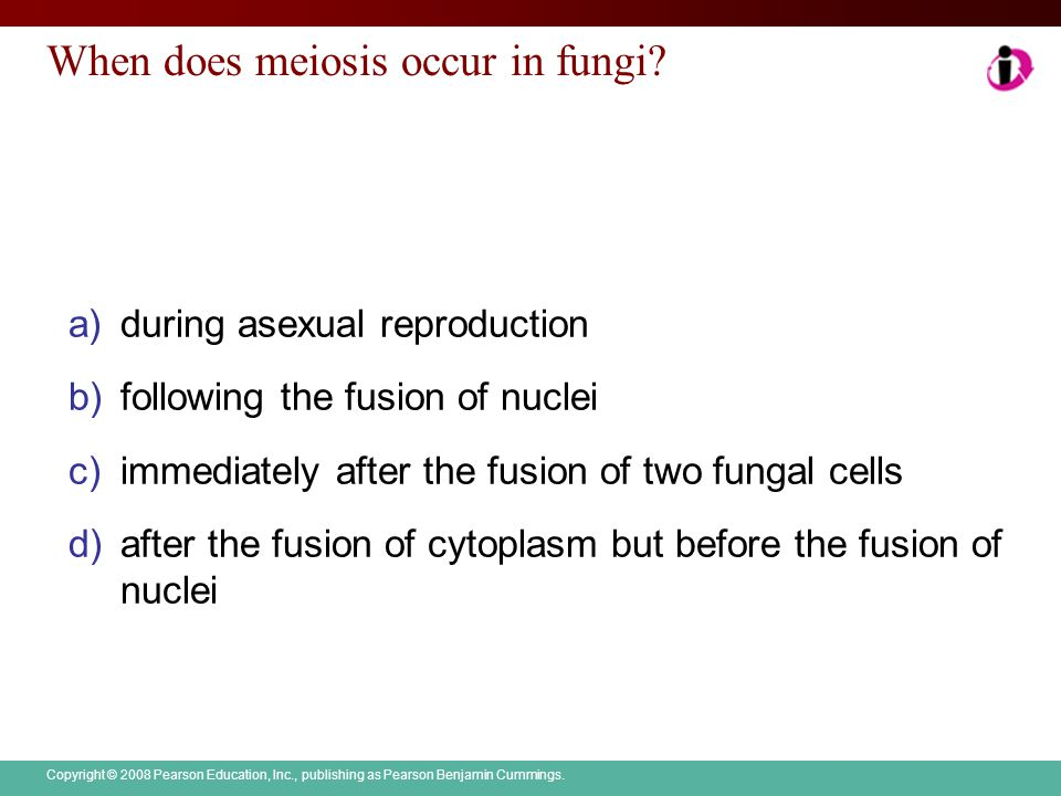 When does meiosis occur in fungi