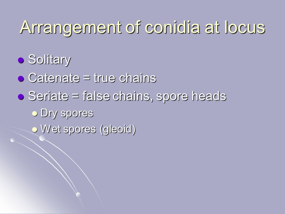 Arrangement of conidia at locus
